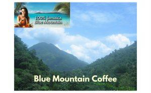 Blue-Mountain-Peak-Coffee