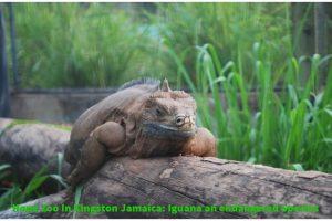 hope-zoo-in-kingston-jamaica